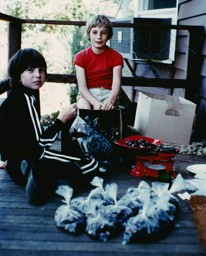 Kids weighing and bagging chestnuts approx 1979